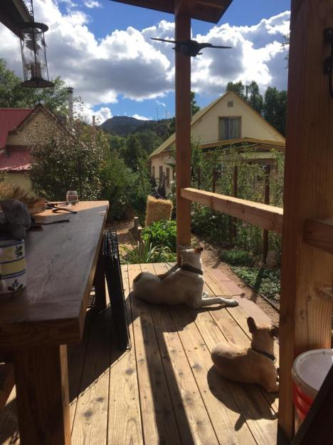dogs, book, coffee on porch: Durango, CO